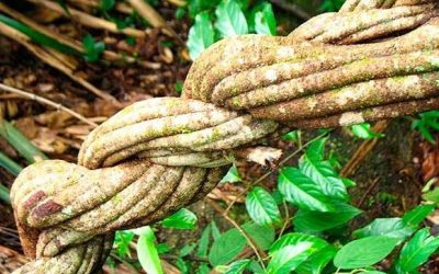 Can Ayahuasca Change your Personality